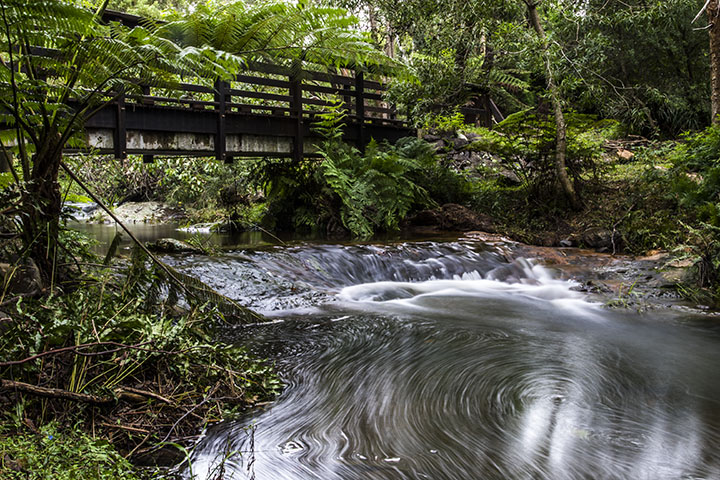 Hinterland Stream Tranquillity Springbrook Queensland