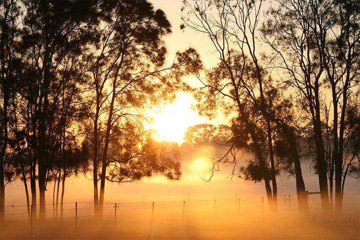 Misty Morning at Carrara Queensland